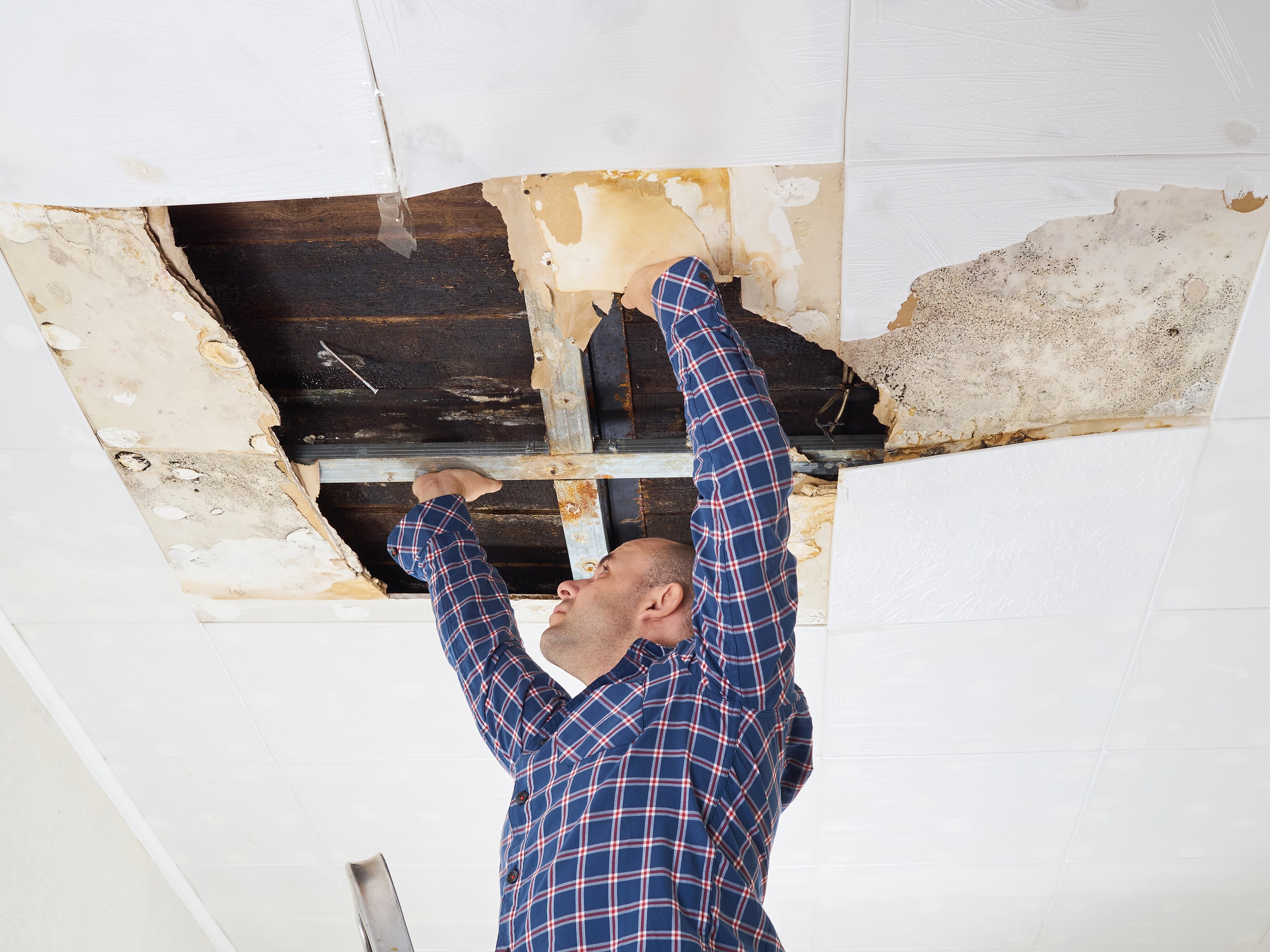 Six Signs of your Building  Having Hidden Mould Growth